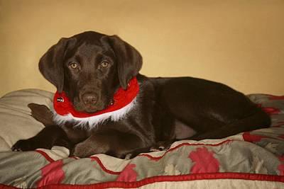 Kim Fearheiley Photography - Dog With Christmas Collar by Leah Hammond