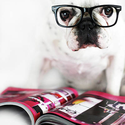 Looking At Camera Photograph - Dog With Glasses by Retales Botijero
