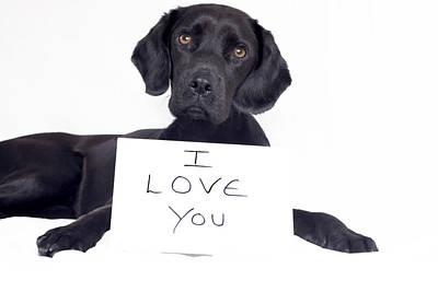 Dog With I Love You Message Art Print by Juliet White