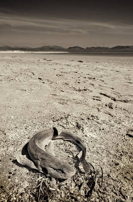 Photograph - dogfish at Newborough Beach by Meirion Matthias