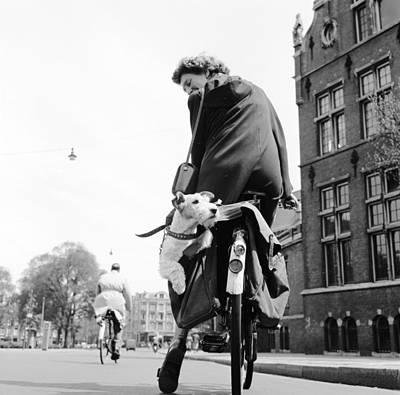 Doggy Bag Art Print by Harry Kerr