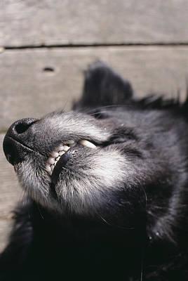 Dog's Muzzle Art Print by Alan Sirulnikoff