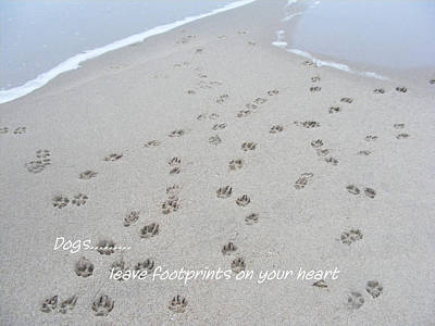 Photograph - Dogs...leave Footprints On Your Heart by Carol Bruno