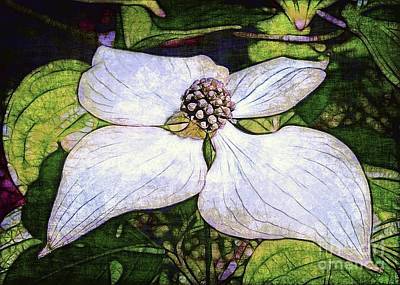Dogwood Days Art Print by Judi Bagwell