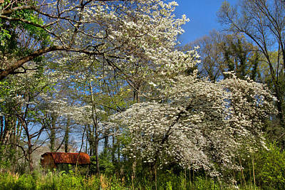 Boyd Photograph - Dogwood Grove by Debra and Dave Vanderlaan