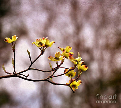 Art Print featuring the photograph Dogwood by Tamera James