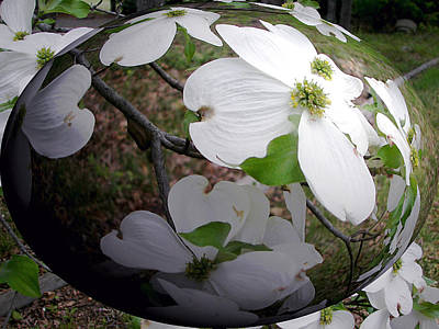 Dogwood Under Glass Art Print by Pamela Hyde Wilson
