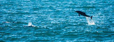 Photograph - Dolphin Dance by Alistair Lyne