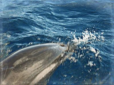Photograph - Dolphin Splash by Paulette B Wright