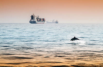 Dolphing Playing In The Sunset Print by Stephen McCluskey