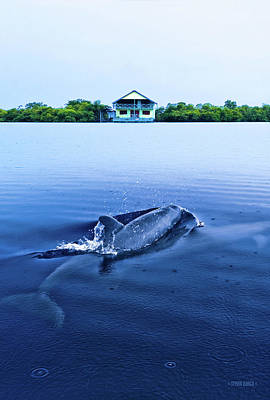Photograph - Dolphins By The Mangrove House by Steven Llorca