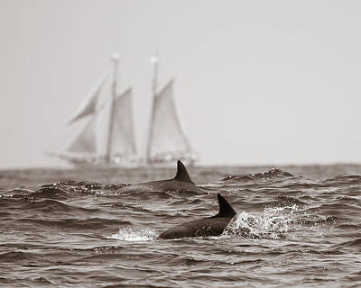 Dolphins With Ship Art Print by Will Edwards