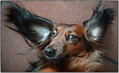 Flevoland Photograph - Dombo  With The Big Ears! by Animals