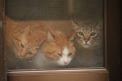 Netting Photograph - Domestic Cat by Akimasa Harada