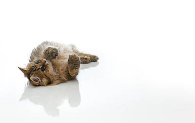 Y120817 Photograph - Domestic Cat by Benjamin Torode