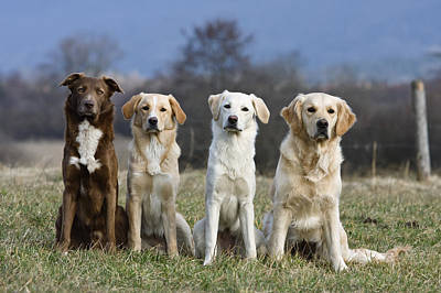 Photograph - Domestic Dog Canis Familiaris Group by Konrad Wothe