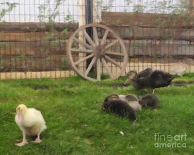 Photograph - Domestic Ducks by Donna L Munro