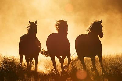 Photograph - Domestic Horse Equus Caballus Trio by Konrad Wothe