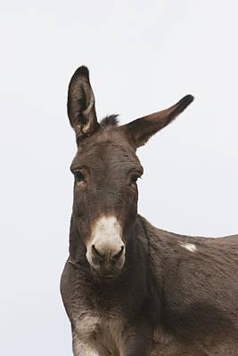 Donkey At The Hajigak Pass, Vardak Art Print by Peter Langer