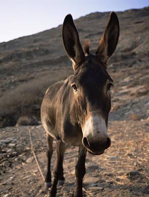 Donkey Art Print by Bjorn Svensson