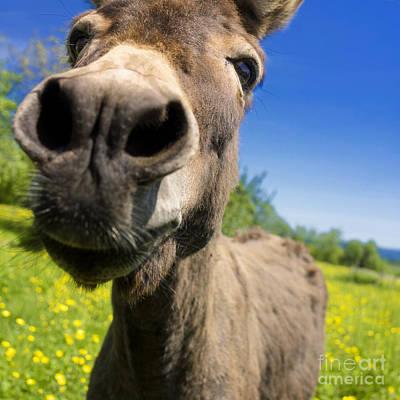 Blurriness Photograph - Donkey. Closeup by Bernard Jaubert