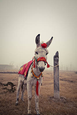 Donkey Art Print by Eastphoto