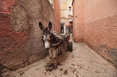 Y120831 Photograph - Donkey In Medina by Dave Stamboulis Travel Photography