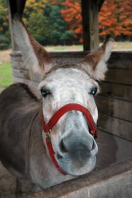 Horse Photograph - Donkey Looks by LeeAnn McLaneGoetz McLaneGoetzStudioLLCcom