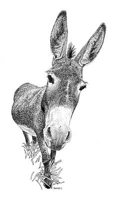 Drawing - Donkey by Scott Woyak