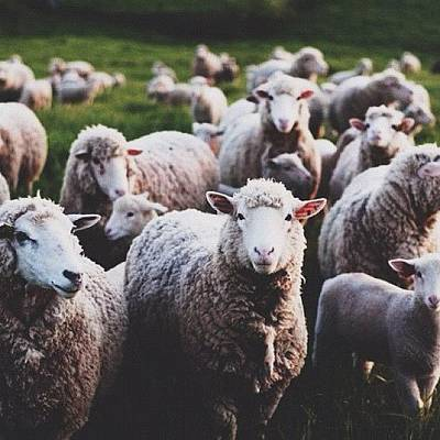 Sheep Photograph - Don't Be #sheep by Daniel Huff