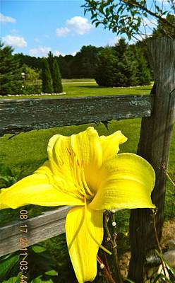 Split Rail Fence Photograph - Don't Fence Me In by Randy Rosenberger