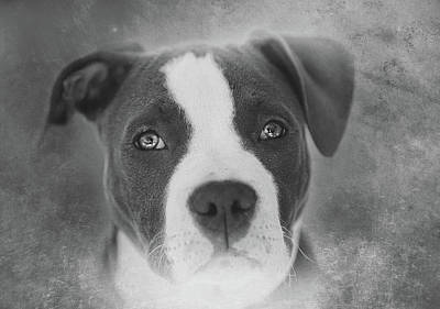 Puppy Photograph - Don't Hate The Breed - Black And White by Larry Marshall