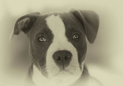 Puppy Photograph - Don't Hate The Breed by Larry Marshall