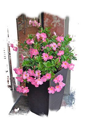 Photograph - Doorway Flowers by Allan Rothman