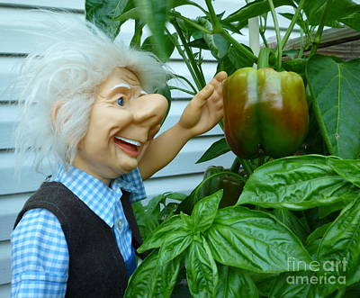 Art Print featuring the photograph Dorf Grandpa Doll Picking Bell Peppers by Renee Trenholm