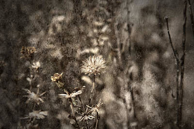 Photograph - Dormant by Mark  Ross