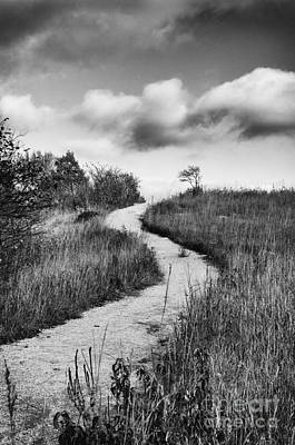 Photograph - Dorothy's Trail by David Waldrop
