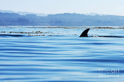 Photograph - Dorsal Fin by Paul Topp