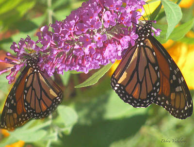 Photograph - Double Butterflies by Debra     Vatalaro