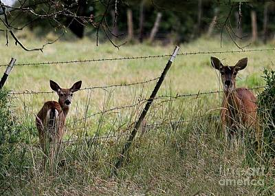 Photograph - Double Deer by Erica Hanel