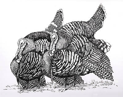 Drawing - Double Gobble by Suzanne McKee