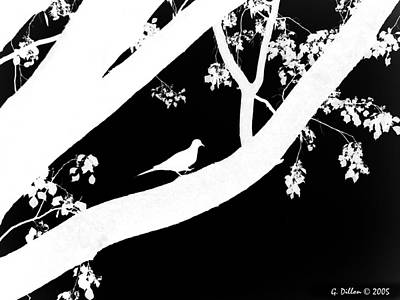 Digital Art - Dove Silhouette On Tree B by Grace Dillon