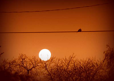 Photograph - Dove Watching Super Moon by Cindy Wright