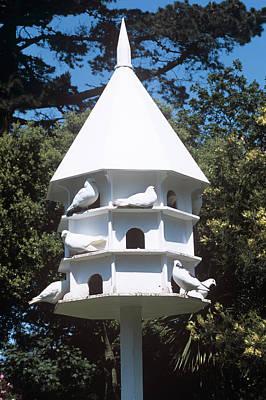 Doves Print by Adrian Thomas