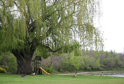 Photograph - Down By The Weeping Willow by Amelia Painter