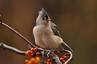 Tufted Titmouse Photograph - Down Coat by Deborah Bifulco