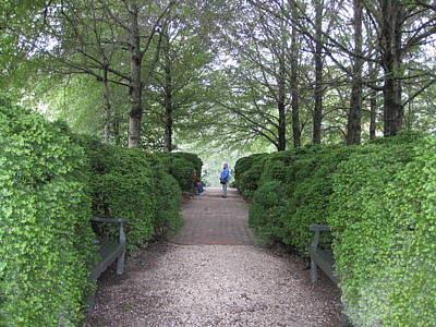 Down The Garden Path Art Print