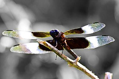 Photograph - Dragon Eyes by Barry Jones