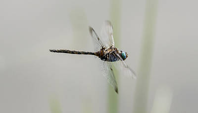 Photograph - Dragon Fly by David Lester