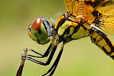 Dragon Fly Art Print by Michelle Armstrong